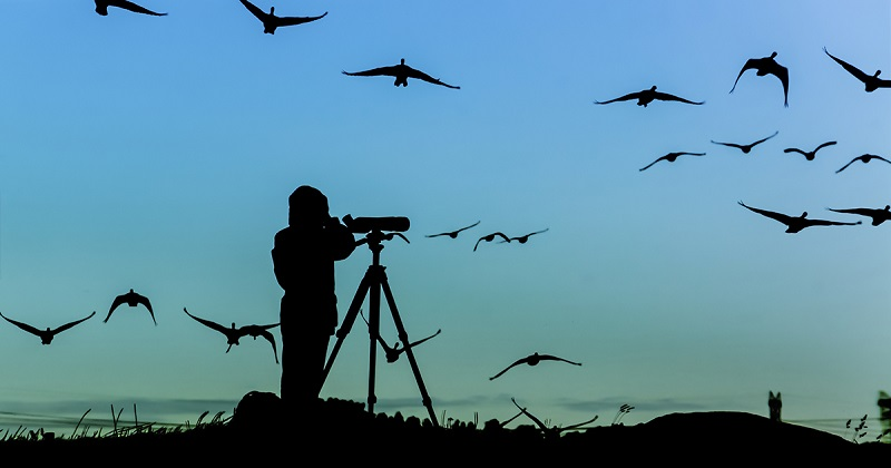 Birdwatching - The Most Popular Recreational Activities for First-Timers